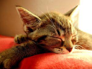 cat-1503243_1280