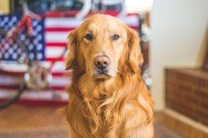 dog-690318_1280
