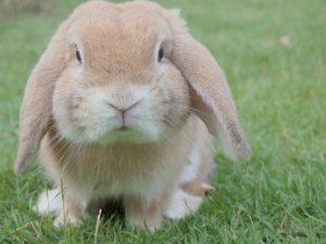 bunny-1149060_1280