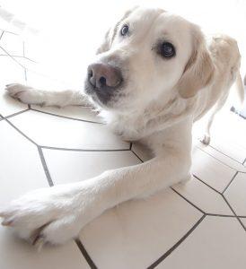 dog-1551702_640