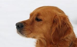 dog-654025_1280