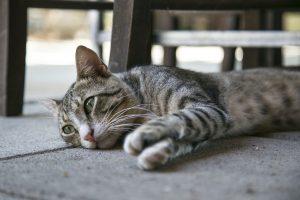 cat-1542856_1280