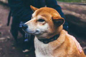 dog-1209959_1280